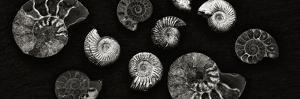 Jurrasic Spirals by Doug Chinnery