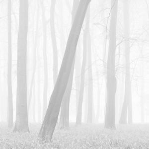 Morning Mists I by Doug Chinnery