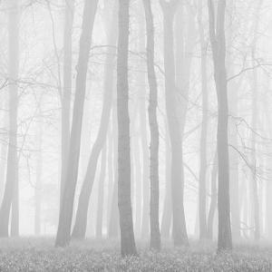 Morning Mists II by Doug Chinnery
