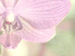 Orchid's Softness by Doug Chinnery