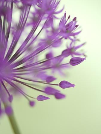 Purple Haze 6 by Doug Chinnery
