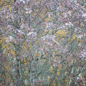 Rowan Tapestry by Doug Chinnery