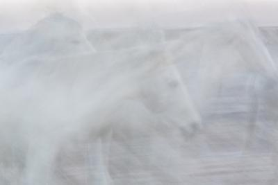 Silent Stallions by Doug Chinnery
