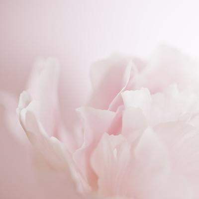 Softly Pink by Doug Chinnery