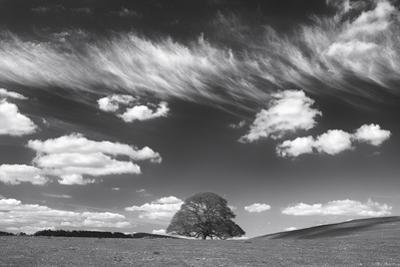 Summer Days by Doug Chinnery
