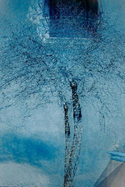 The Trees of Life III by Doug Chinnery