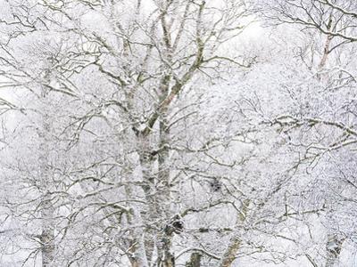 Winter Hush I by Doug Chinnery