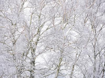 Winter Hush II by Doug Chinnery