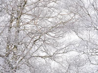 Winter Hush III by Doug Chinnery