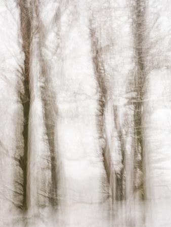 Winter Hush IV by Doug Chinnery