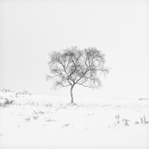 Winter Softness 1 by Doug Chinnery