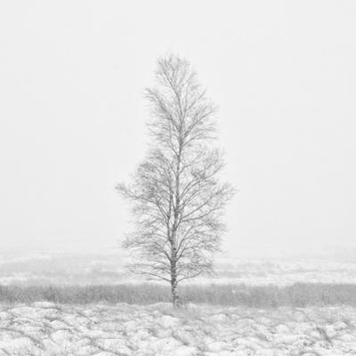 Winter Softness 2 by Doug Chinnery