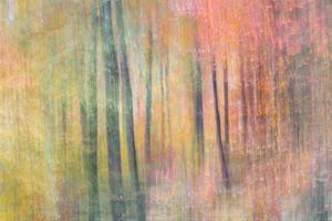 Woodland Dreams IV by Doug Chinnery
