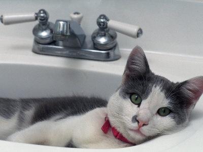 Cat Lying in a Sink