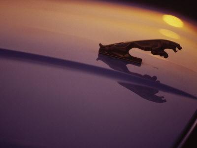 Hood Ornament of Jaguar with Light Reflection