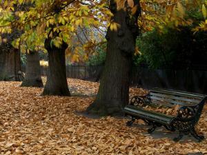 Greenwich Park in Autumn by Doug McKinlay