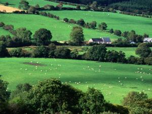 The Fields and Farmhouses of County Cork, Ireland by Doug McKinlay