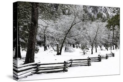 Fence, Trees and Snow by Doug Meek
