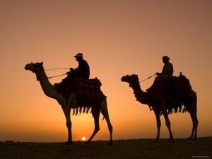 Camels Near the Pyramids at Giza, Cairo, Egypt by Doug Pearson