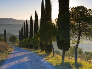 Country Road Towards Pienza, Val D' Orcia, Tuscany, Italy by Doug Pearson