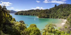 Picturesque Bay in Idyllic Kenepuru Sound, Marlborough Sounds, South Island, New Zealand by Doug Pearson