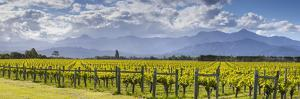 Picturesque Vineyard, Blenheim, Marlborough, South Island, New Zealand by Doug Pearson