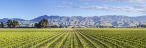 Picturesque Vineyard, Blenheim, Marlborough, South Island, New Zealand by Doug Pearson