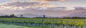 Picturesque Vineyard Illuminated at Sunset, Blenheim, Marlborough, South Island, New Zealand by Doug Pearson