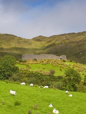 Sheep grazing near Staigue Stone Fort on the Iveragh Peninsula by Doug Pearson