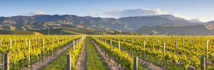 Vine Rows and Dramatic Landscape Illuminated by Doug Pearson
