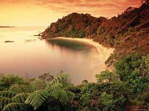Whale Bay, Northland, New Zealand by Doug Pearson