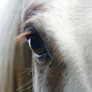 White Horse Eye by Doug88888