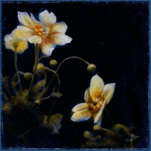 Midsummer Night Bloom III by Douglas