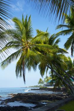 Beach, Kailua-Kona, Big Island, Hawa, USA by Douglas Peebles