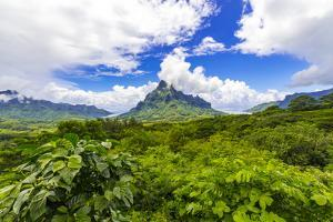 Belvedere Lookout, Cook's Bay, Opunohu Bay, Moorea, French Polynesia by Douglas Peebles