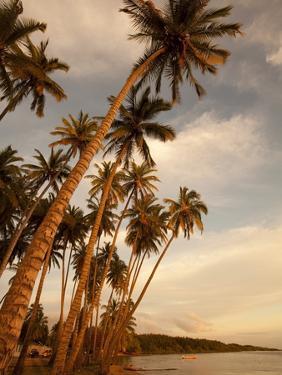 Coconut Grove, Molokai, Hawaii by Douglas Peebles