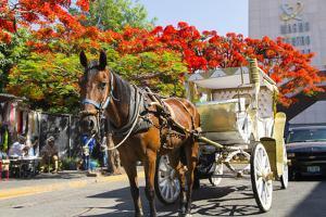 Horse and Carriage, Guadalajara, Jalisco, Mexico by Douglas Peebles