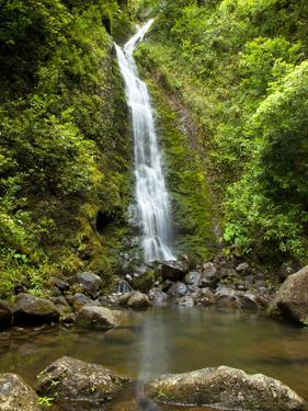 Lulumahu Falls, Lulumahu Valley, Nuuanau, Oahu, Hawaii, USA by Douglas Peebles