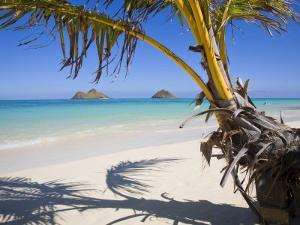 Palm shadow on Lanikai Beach, Mokulua islands, Hawaii by Douglas Peebles