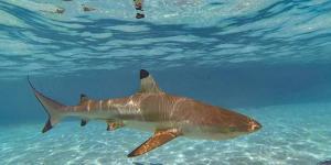 Swimming with sharks and Stingrays, Tiahura, Moorea, French Polynesia by Douglas Peebles