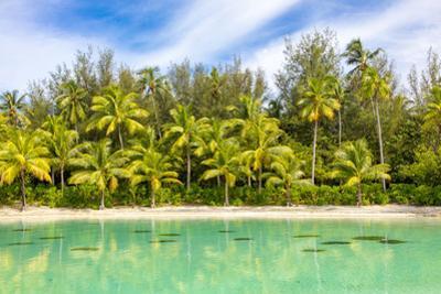 Tropical forest and beach, Bora Bora, French Polynesia by Douglas Peebles