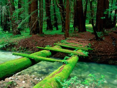 Bridge Covered in Moss over Little Sur River