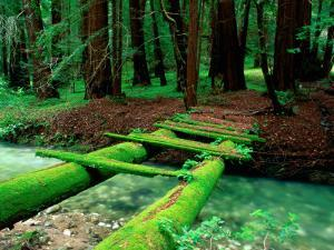 Bridge Covered in Moss over Little Sur River by Douglas Steakley