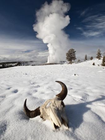 Buffalo Skull and Old Faithful Geyser
