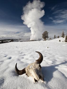 Buffalo Skull and Old Faithful Geyser by Douglas Steakley