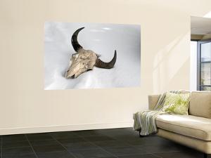 Buffalo Skull by Douglas Steakley