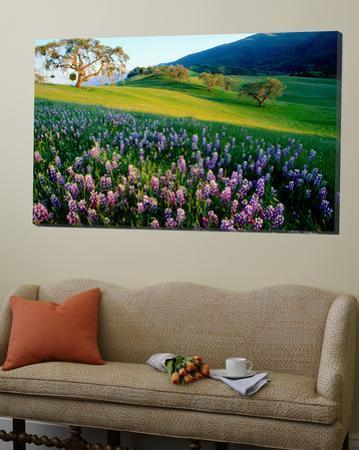 Carmel Valley in Spring by Douglas Steakley