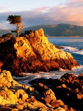 Cypress Tree in Coastal Cliff by Douglas Steakley