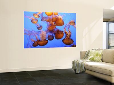 Jellyfish at the Monterey Bay Aquarium by Douglas Steakley