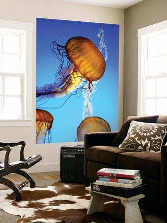 Jellyfish in Monterey Bay Aquarium by Douglas Steakley